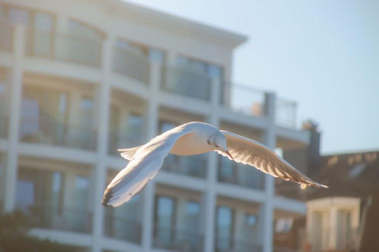 Seemöwe Gull Seagull EyeEmNewHere EyeEm Nature Lover EyeEm Best Shots Bird Spread Wings Flying Water Mid-air Sky Animal Themes Close-up Architecture Building Exterior Bird Of Prey