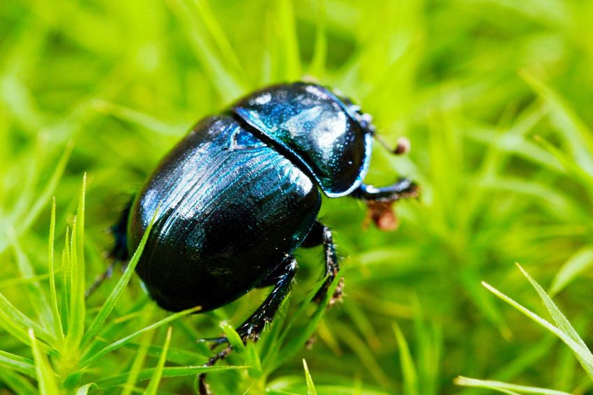 Perspectives On Nature Insect Animal Themes Animals In The Wild One Animal Wildlife Close-up Grass Green Color No People Outdoors Day Nature Focus On Foreground Ladybug Nature Macro EyeEm Nature Lover EyeEm Best Shots Blue Black Green Small Motion Beauty In Nature EyeEmNewHere