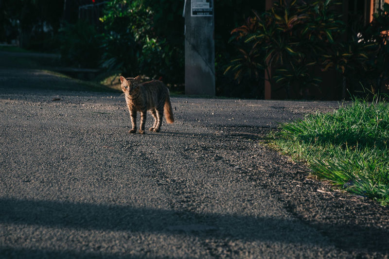 View of a dog on road