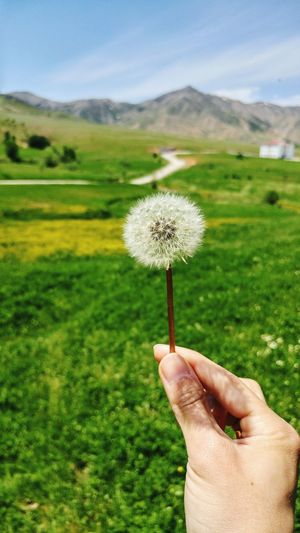 Human Hand Flower People Green Color Sky Landscape Freshness Nature Happiness Relaxing Taking Photos EyeEm Gallery Eyeemphotography Karahindiba
