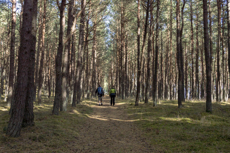 Activities Forest Path Nature Nordic Walking Walk Wood Active Lifestyle  Day Forest Move Recreation In Nature Sport Sport And Nature Two People Walking