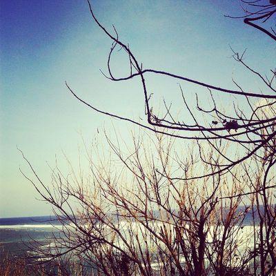 branch Trees Forest Sea Seaandsky Sky Bluesky Skymadness Ocean Beach Balibeach Sand Blueocean Blue Instanusantarabali Instanusantara Instanesia Instadaily Instagood Igers Picoftheday Photooftheday Picotheday Bali INDONESIA LangitbaliPhotoworks