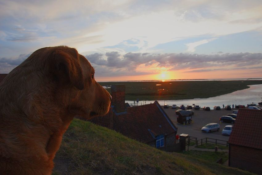 Domestic Animals Animal Themes Sunset Sky Mammal Cloud - Sky One Animal Water Nature Pets Sea Outdoors Dog Beauty In Nature No People Scenics Close-up Day Fetch Red Lab Labrador LabradorRetriever Fox Red Lab Labrador Retriever Lab