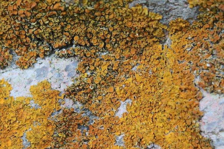Yellow Textured  Close-up Beauty In Nature Nature Outdoors Beach Wet Stone Algae Yellow Mushrooms Yellow Mushroom