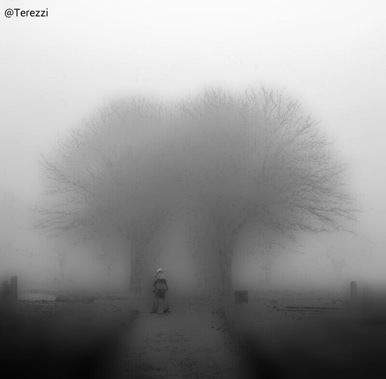 fog, tree, one person, rear view, landscape, winter, people, full length, outdoors, bare tree, one woman only, day, nature, cold temperature, adult, only women, adults only, animal themes
