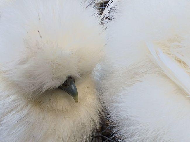 Birds Market White Detail Close-up Pet Portraits