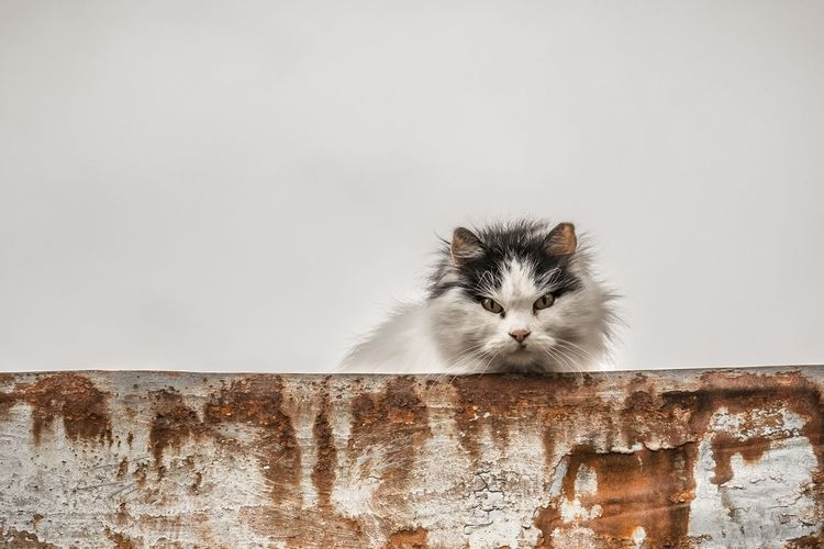 Portrait Of Cat In Front Of Wall