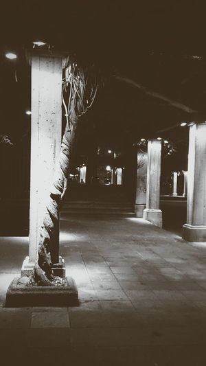The tree column Absence Architectural Column Architectural Feature Architecture Building Built Structure Column Corridor Dark Diminishing Perspective Empty Illuminated In A Row Interior Light Lighting Equipment Night No People The Way Forward Travel Destinations Vanishing Point Walkway