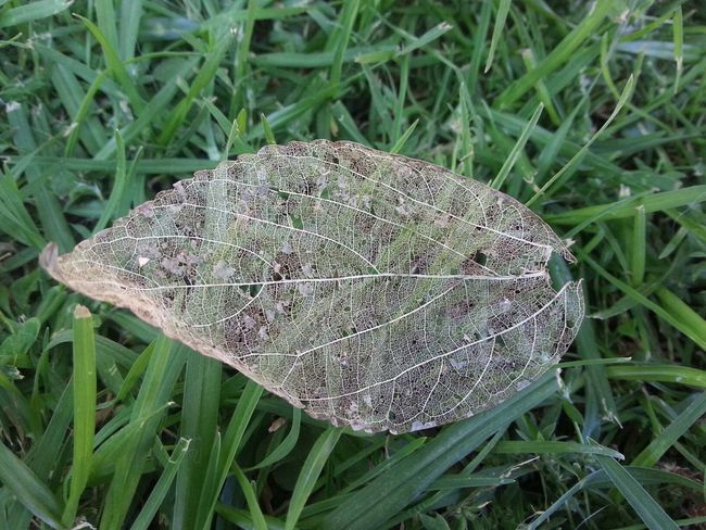 Decay Detailsofdecay South Africa Leaf conversing the matchless worth of the LORD Jesus Christ