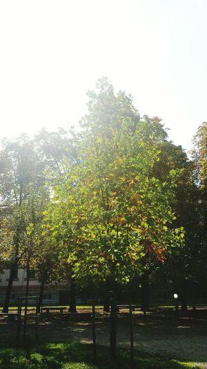 Eyemphotography Creative Light And Shadow EyeEm Gallery CreativePhotographer EyeEm Nature Lover Tree_collection  Trees