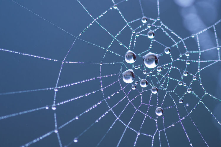 Low angle view of water drops on spider web