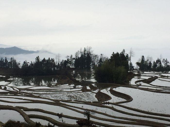 Terraced Rice Fields Terrace Farming Terrace Gardening Water Reflections