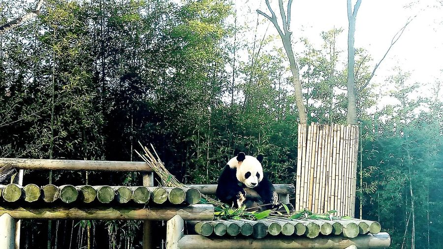 🐼 panda Street