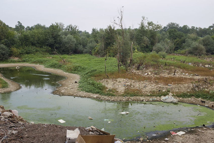Dirt Forest Garbage Green Infection Landfill Nature No People Outdoors River Trash Water Woods