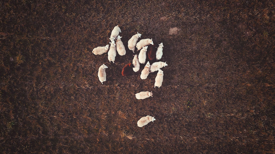 - THE FIELD - Check This Out Drone Photography DJIxEyeEm Dronephotography Drone  Field No People High Angle View Land Nature Large Group Of Objects Close-up Day Directly Above White Color Freshness Food Mushroom Still Life Brown Indoors  Fungus