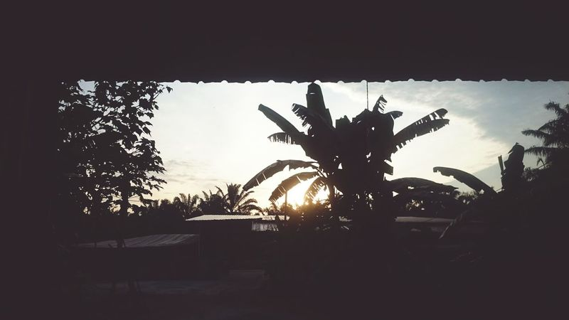 Hometown life, is so relax and easy. Sunrise In The Village Nature A New Day Oil Palm Trees Kampung Life