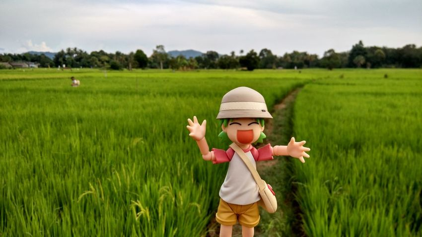 Agriculture Crop  Day Field Grass Growth Lifestyles Nature Outdoors Plant Rural Scene Sky Toy Green Color Paddy Paddy Field Adventure Explore Happiness EyeEmNewHere Live For The Story The Great Outdoors - 2017 EyeEm Awards