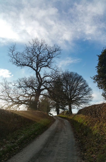 Dirt road along bare trees and plants against sky