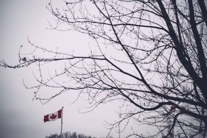 Canada Flag Flag Patriotism Bare Tree Tree Branch Low Angle View Day No People Nature Outdoors Sky
