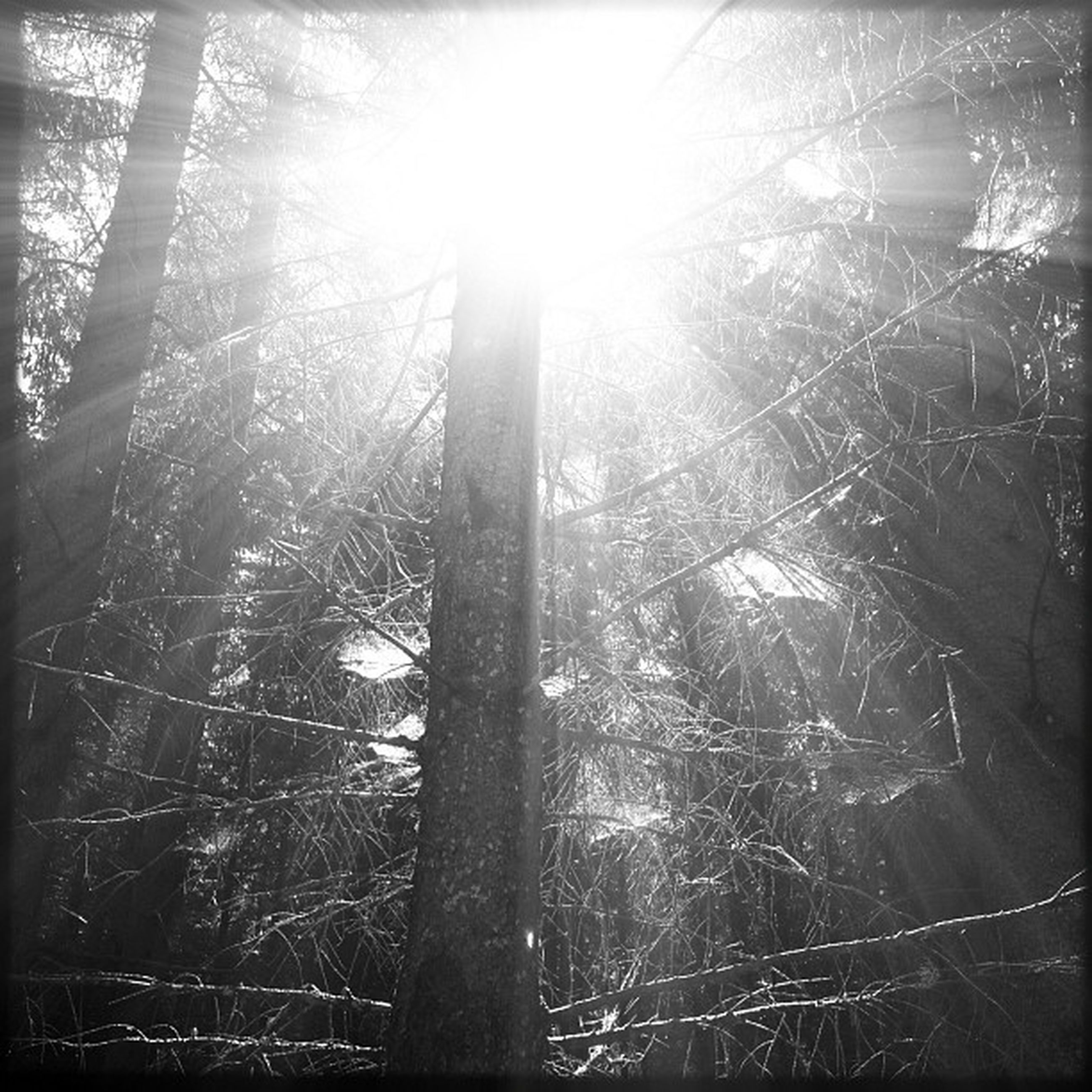 sun, tree, sunbeam, sunlight, lens flare, tranquility, tree trunk, nature, low angle view, growth, forest, branch, beauty in nature, bright, sunny, back lit, day, woodland, tranquil scene, scenics
