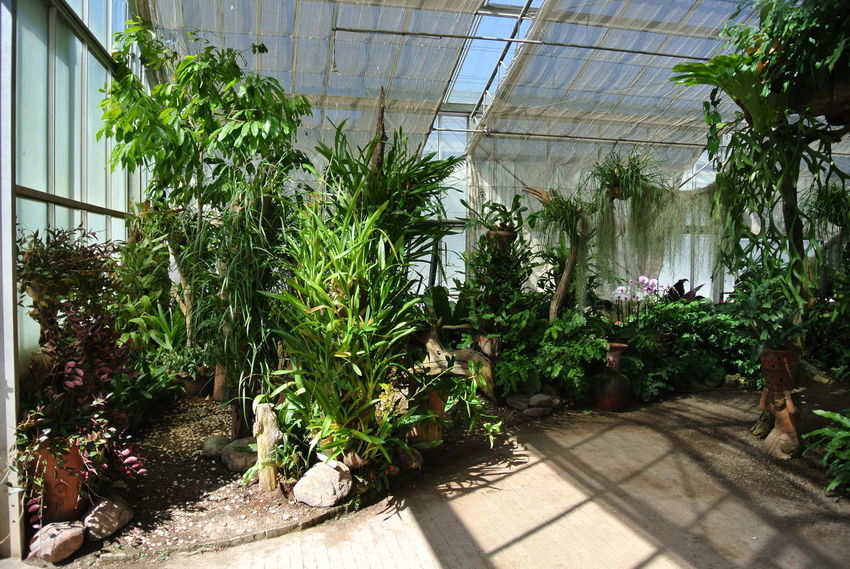 Growth Plant Tree Day Shadow Sunlight Outdoors Nature Greenhouse