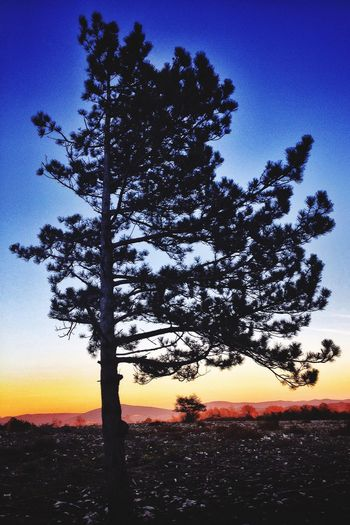 IPhoneography Landscape_photography Sunset Tree Sulhouettes