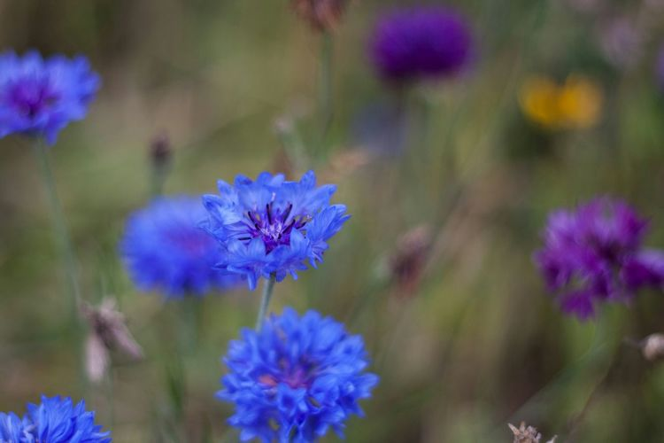 Blue ones....