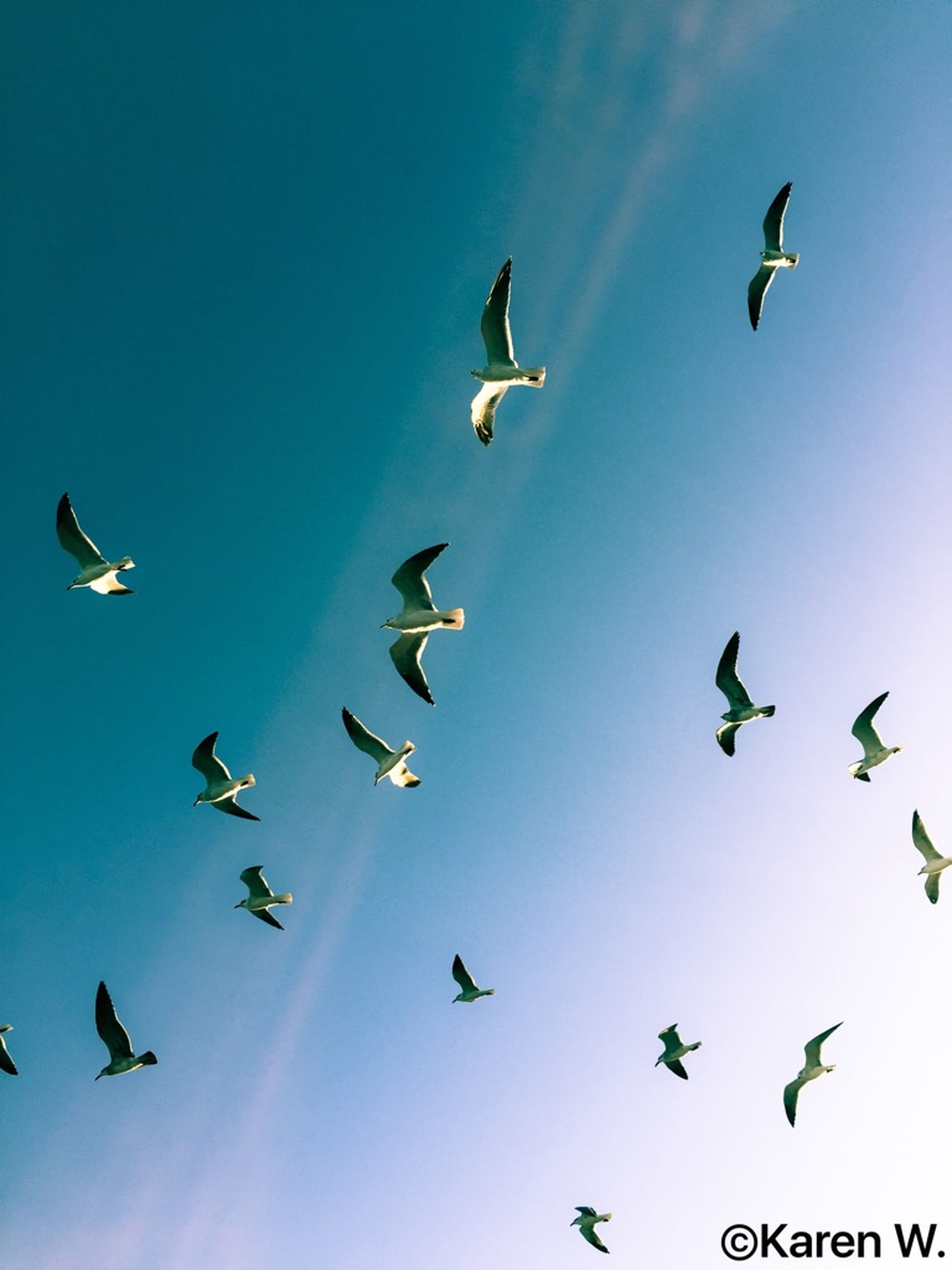 flying, bird, sky, blue, animal wildlife, mid-air, low angle view, motion, animals in the wild, no people, large group of animals, animal themes, spread wings, flock of birds, outdoors, day, nature