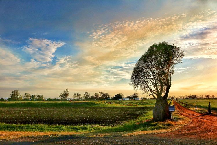 Countryside Tree Sky Field Nature Sunset Beauty In Nature Agriculture No People Non-urban Scene Outdoors Nature Farm Rural Scene Agriculture BottleTree