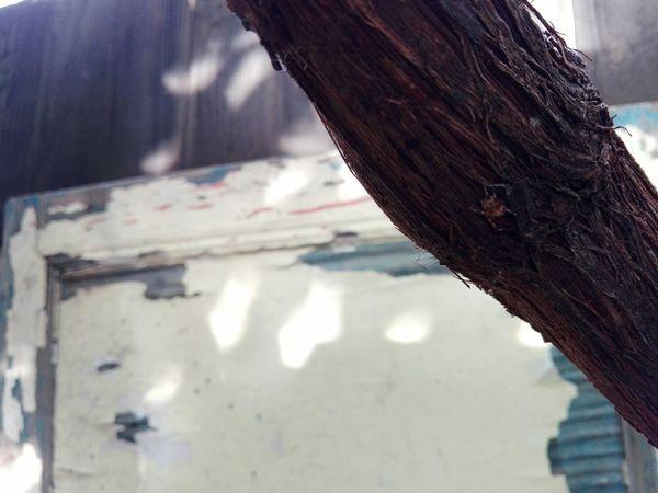 Day Outdoors No People Close-up Nature Plant Vinewood Ionita Veronica Eyeem Market Huawei Photography @WOLFZUACHiV Veronica Ionita Huaweiphotography Wolfzuachiv On Market Edited By @wolfzuachis Wolfzuachis Close Up