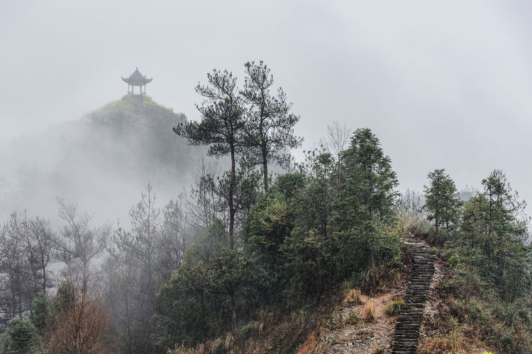 Fairyland Chinese Classic Dream Fairyland Fine Art Photography Fog Foggy Hermit Hermitage Landscape Mist Moody Nature Rain Stairs Traditional Tree Zen The Great Outdoors - 2018 EyeEm Awards