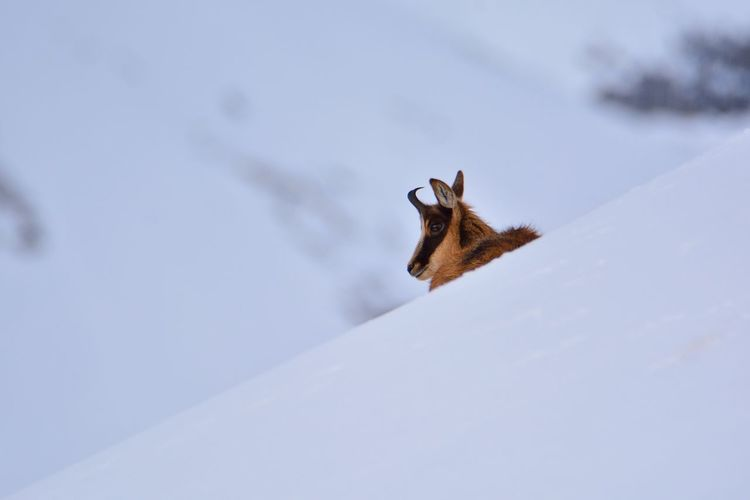 Lizard on snow covered