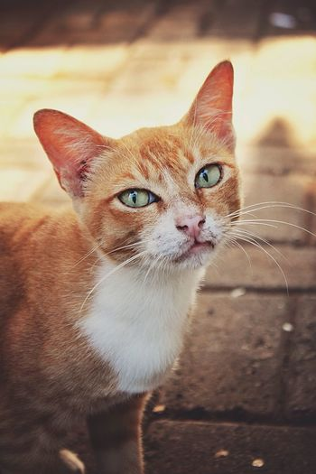 A Cat | a Yellow Cat | this is my April Love