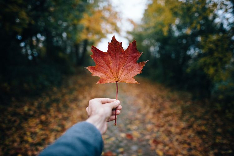 Cropped hand of person holding autumn leaf against trees