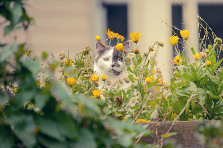 Close-up of cat sitting in yellow flowers