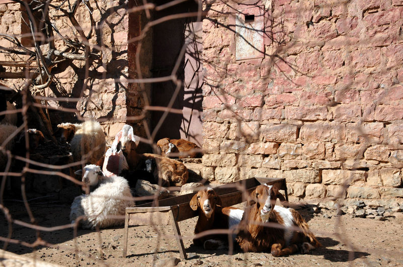 View of an animal on wall