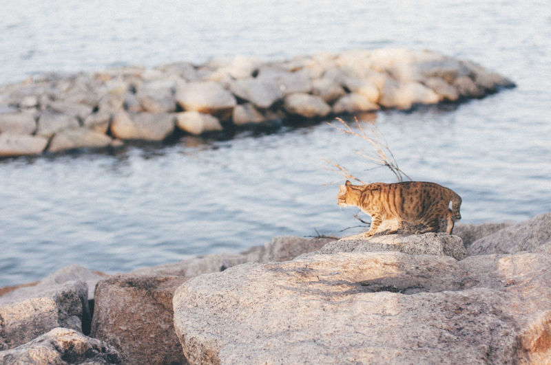 Tabby Cat On Seashore
