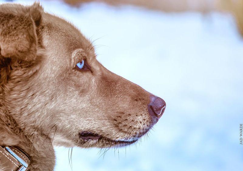One Animal Animal Head  Domestic Animals Close-up Pets Animal Body Part Dog Mammal Animal Themes Animal Eye No People Outdoors Day