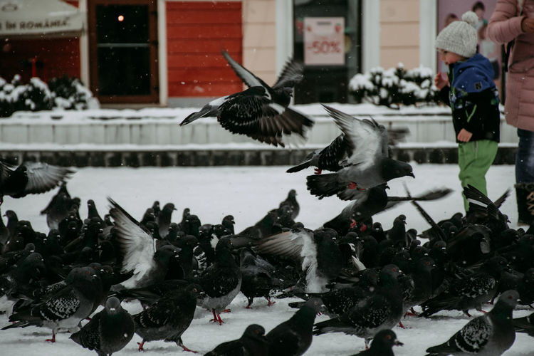 Flock of birds in snow