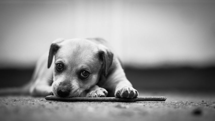 Ну никак не мог пройти мимо этого щенка... А вообще то я направлялся в парк :) Pets Dog Dogslove Dogs щенок собачка собака Пермь Perm Russia First Eyeem Photo