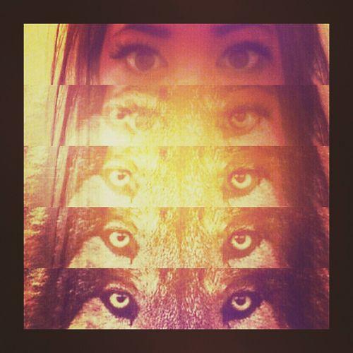 Everyone gas their own spirit animal ? Fierce Taking Photos Follow Me Wolf Pack
