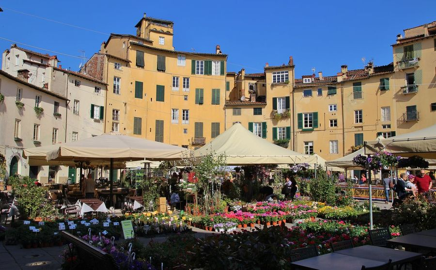 Lucca Italy Anfiteatroromano Architecture Blue Building Building Exterior Built Structure Cafe City Clear Sky Day Flower Flowering Plant Incidental People Market Nature Outdoors Plant Residential District Sky Sunlight Women