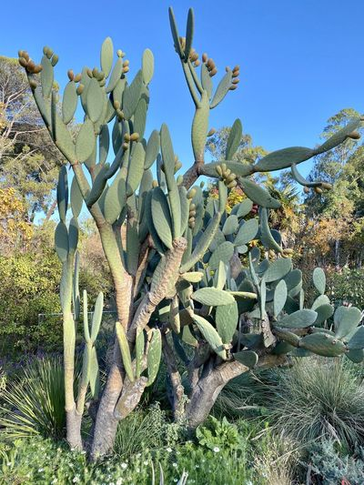 Growth Cactus