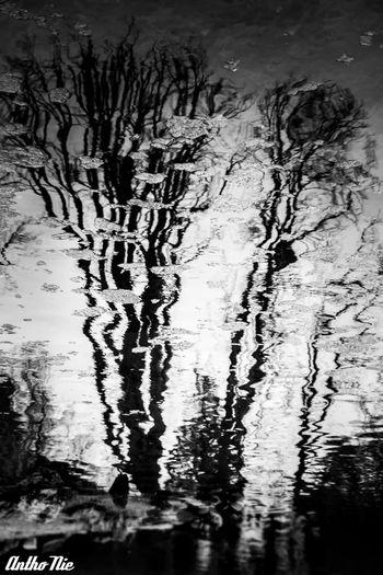 Reflection Blackandwhite Monochrome Vetto Team