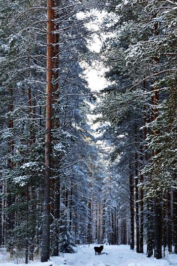 Snow Winter Cold Temperature Weather Nature Tree Outdoors Snowing Frozen No People Beauty In Nature Tranquility Day