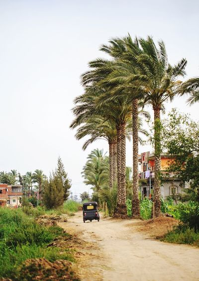 Egypt Village Transportation Motorized Traveling Travel Palm Trees Palmtree Tree Canal Walkway Nature Feel The Journey Journey Travel Photography Village Life Village View Motorcycle
