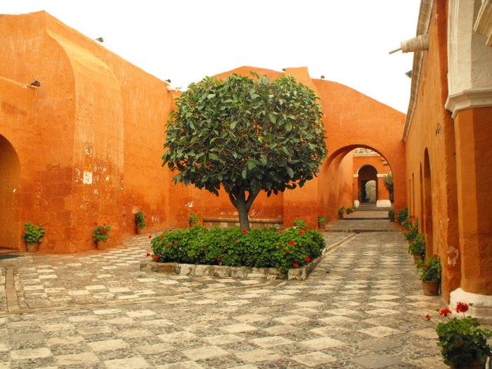 Ancient Civilization Arequipa Green Color Monastery Peru Plant Religion Santa Catalina