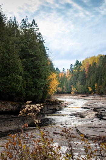 River flowing amidst trees in forest against sky during autumn