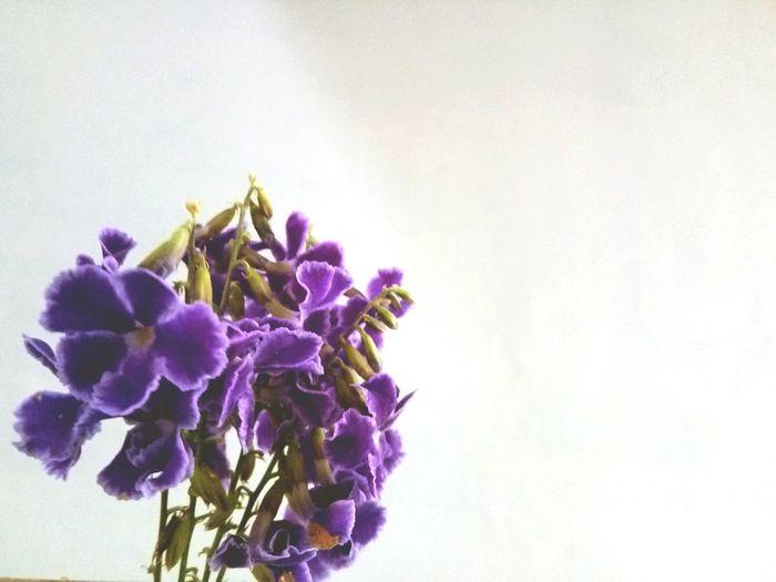 lavender pick n