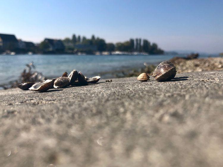 Seashells EyeEm Selects Water Beach Sand Land Sea Nature Close-up Marine Selective Focus